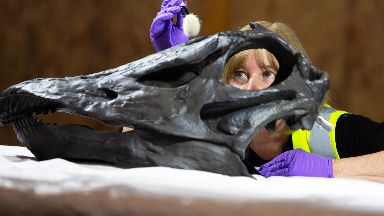 Head of conservation Lorraine Cornish works on Dippy.