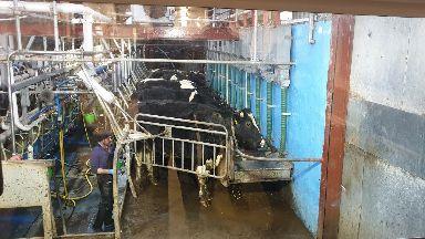 Farm: Kenny Groat owns a dairy herd in Aberdeenshire.