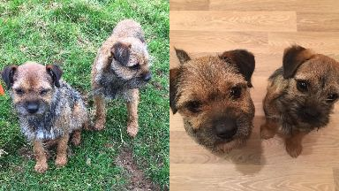 Missing: Ruby and Beetle were last seen at a festive hunt.