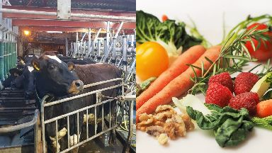 Debate: Both vegans and livestock farmers have spent the past two months promoting their differing views.