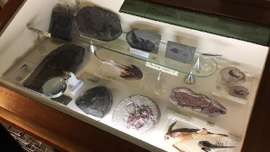 Finds: Just a few examples from Bob Davidson's fossil collection.