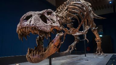 Roaring success: Trix the T-rex has embarked on a European tour.