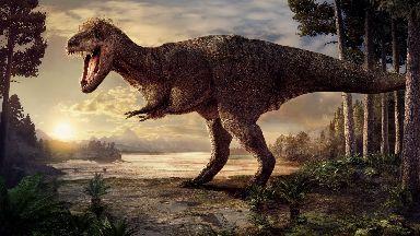 Amazing: An artist's impression of a Tyrannosaurus rex.