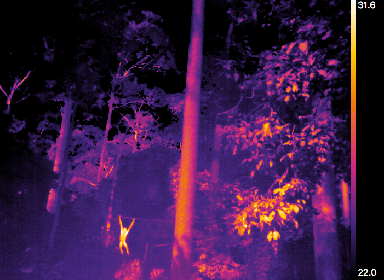 Thermal cameras could prevent poaching.