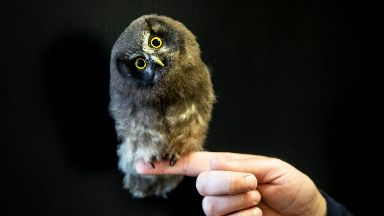 Marv-owl-lous: Miska has been named after a Swedish naturalist.
