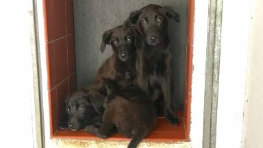Puppied: The dogs were abandoned at the side of the B743.