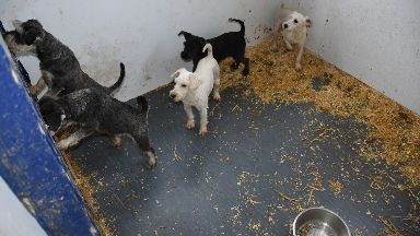 Abuse: Puppies were kept in horrible conditions.