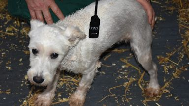 Squalor: Dogs were being kept in 'absolutely disgraceful' conditions.