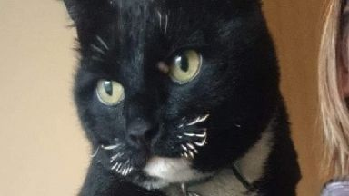 Ordeal: Borris returned with burnt whiskers.