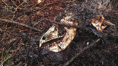 Carcass: Dead animals were found throughout the estate.