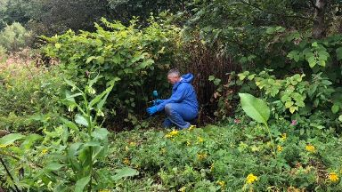 Invasion: Exotic species such as Himalayan balsam and Japanese knotweed are spreading through the countryside.