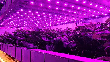 Vertical farming sees food grown on racks.