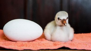 Flamingo: The chick hatched on Friday.