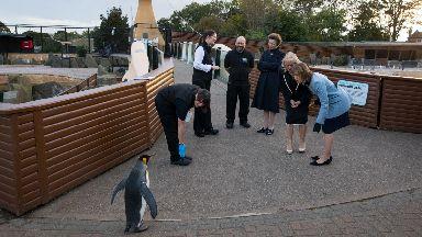 Edinburgh Zoo: Princess Anne met Sir Nils Olav.