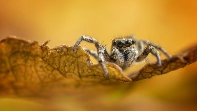Spider: Mr Doogue said photography helped him back from the brink of suicide.