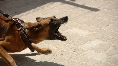 Out of control: Dog control laws in Scotland have been described as 'not fit for purpose'.