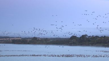 Flying high: The geese stop in Montrose on their way down south.