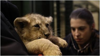 Cubs: keepers have done their first health check