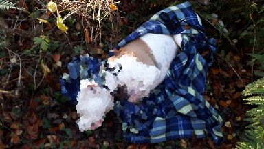 Investigation: The dog was dumped in woodland.
