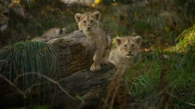 Edinburgh Zoo: The cubs have been named.
