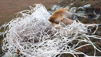Waste: Plastic trapped the animal and prevented it from eating.