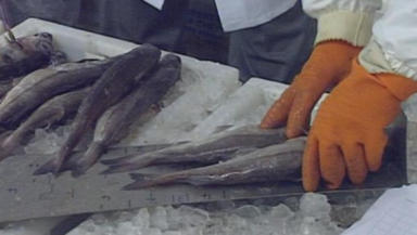 Trade: The fisheries sectors 'should be protected', the committee said.