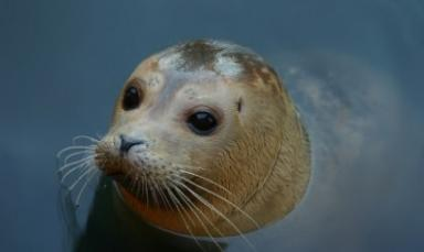 Animal charity gives advice on seal pups