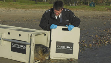 Miracle seal pup released back into wild