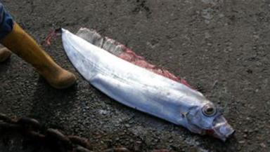Mystery: Dealfish washed ashore on Isle of Mull