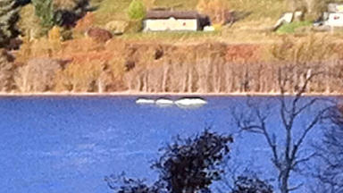 Nessie? Taken from the banks of Loch Ness