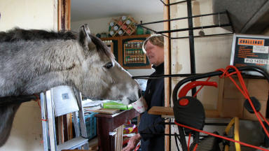 Court battle: Bid to find home for Grey Lady Too.