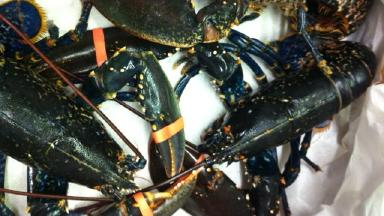 Fish: Police have appealed for information on the lobsters theft.
