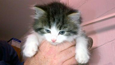 Rory the kitten.