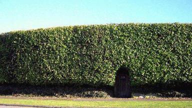 High hedge