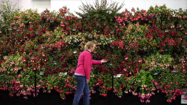 Woman looks at plants at Gardening Scotland 2013, quality image.