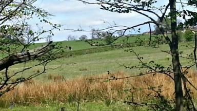 Bellshill greenbelt