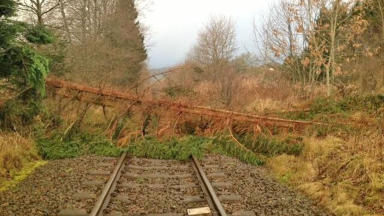 High winds: The storm brought a tree down on the line in Moulinearn, Perthshire.