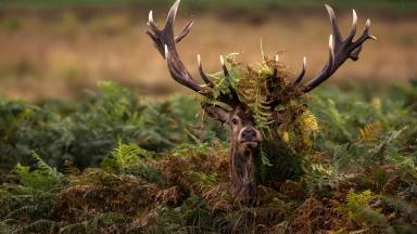 Hide 'n' Seek by Christopher Mcleod shortlisted in the Worldwide Wildlife category.