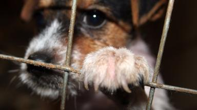 Buyers beware: Concerns over potential illegal puppy sales.