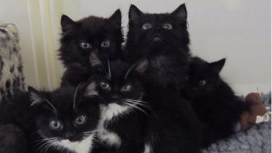 Abandoned kittens: Five cats found dumped in bin.