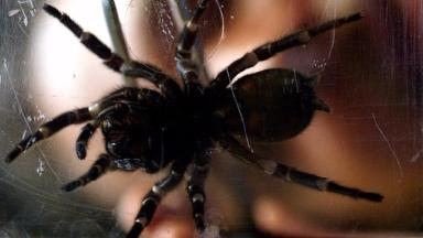 Woman called the police after mistaking a piece of fluff for a deadly spider