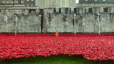 Iconic: The poppies display at the Tower of London.