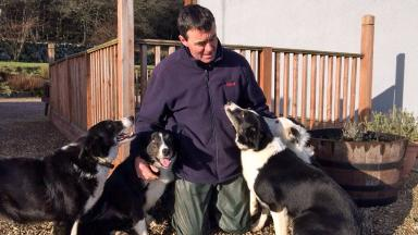Reunited: Sheepdogs with owner Roddy Scarborough.