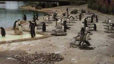 Mating season: Penguins gather at Penguins Rock.