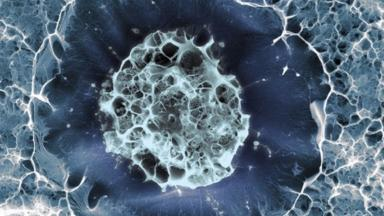A single human stem cell