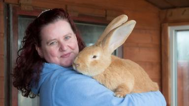 Atlas: Giant rabbit with his new owner Jen Hislop.