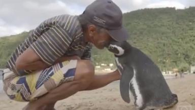 Joao Pereira de Souza saved the penguin when he found it caked in oil.