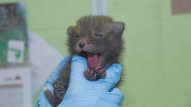 Utah: Tiny cub being cared for by animal rescue workers.