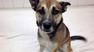 Holly: Rescued by the Scottish SPCA.