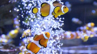 Walk into any pet store in Scotland and you're going to find Nemo.